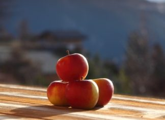 fresh apples in sunrise light