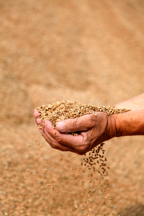 Paul planted churches as farmers planted seeds. 1 Cor 3:6