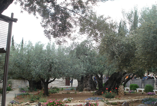 The Garden of Gethsemane - Photo by Reta Finger