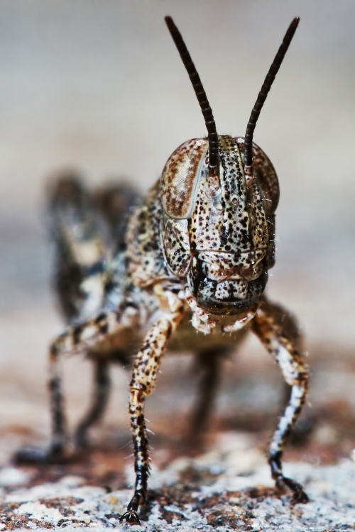 Locust Larve photo, licensed through Stock Photo Secrets