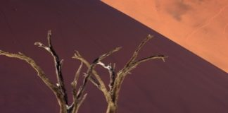 Dead Acacia Trees and Dunes in Namibia