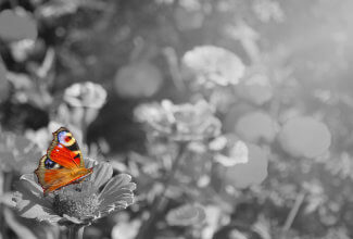Colorful butterfly on black and white background