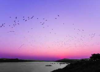 Sunset in pinks over water, with a flock of birds