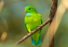 A close up of a beautiful bright green bird